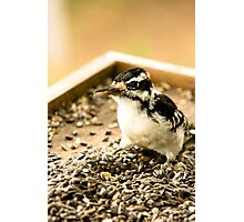 Woodpecker Photographic Print