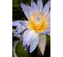 Drenched Water Lily Photographic Print
