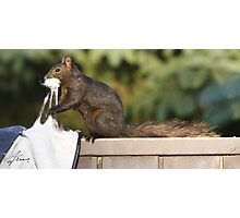 Stuffed Rodent Photographic Print