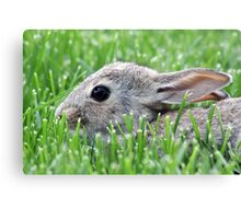 Baby Bunny in the Grass Canvas Print