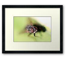 Eye of the Fly! Framed Print