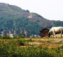 Pony and Castle by artfulvistas