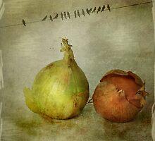 Onions by Þórdis B.