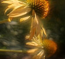 Soft Focus by KatsEyePhoto