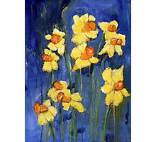 Spring Daffodils Photographic Print