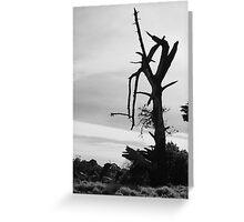 Desolation - Mornington Greeting Card