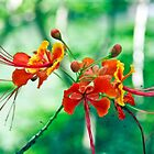 Red Orchids by phil decocco