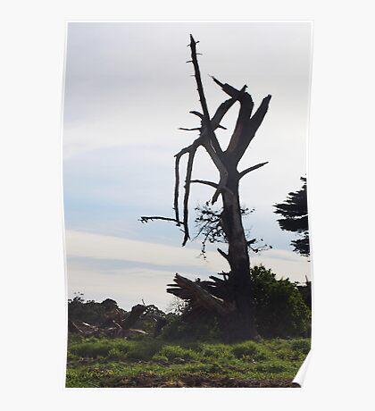 Desolate - Mornington Poster