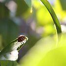 Climbing High - ladybird by Kathryn Steel