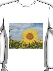 Sunflowers in a field T-Shirt