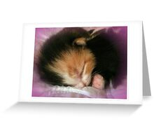 Little Ball of Fur Greeting Card