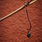 Grape on House Wall by Kathryn Steel