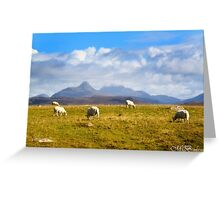 Highland Sheep Greeting Card