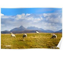Highland Sheep Poster