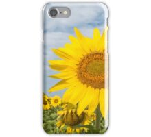 Golden sunflower flowers iPhone Case/Skin