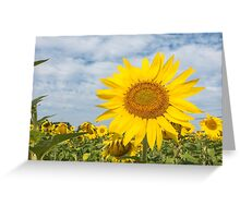 Golden sunflower flowers Greeting Card
