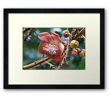 Cannon Ball Tree Flower Framed Print