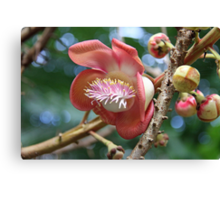 Cannon Ball Tree Flower Canvas Print