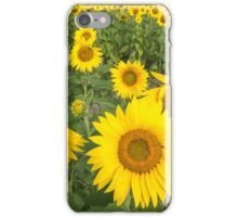 Field of sunflowers in summer iPhone Case/Skin