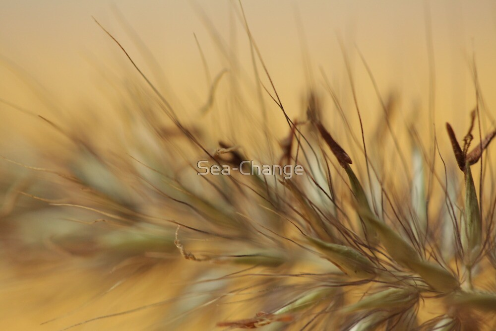 Grasses by Sea-Change