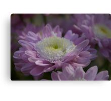 Purple Chrysanthemums Canvas Print