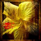Manipulated Hibiscus. by Lynne Haselden