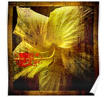 Manipulated Hibiscus. Poster