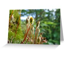 Common Hair Cap Moss | Wisconsin Woodlands Greeting Card
