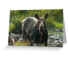 September Cow Moose Greeting Card