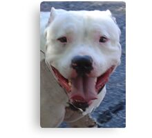 Pit Bull Pretty Canvas Print