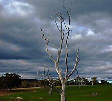 Barren Tree by Andrew (ark photograhy art)