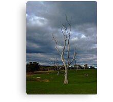 Barren Tree Canvas Print