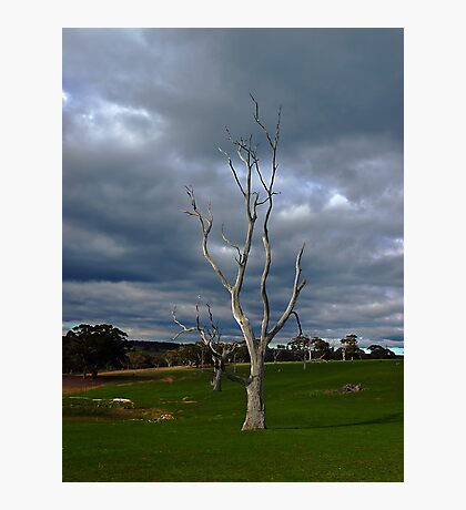 Barren Tree Photographic Print