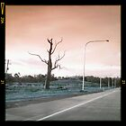 Pink Sky, Dead Tree by Philip Werner