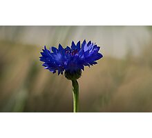 Best Blue Ever Photographic Print