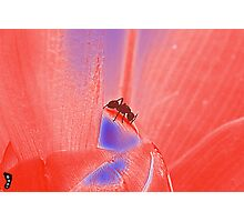 """Ant Flower """"Red Exposure""""  Photographic Print"""