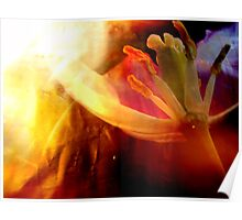 Beauty & Tulip. Poster