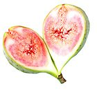 A Fig from my Garden - JUSTART © by JUSTART