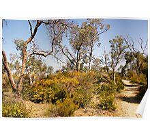 Springtime in the bush Poster