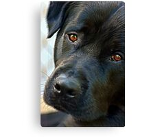 Conversations with my Dog Canvas Print