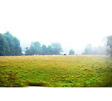 Rural Misty Morning Portrait Photographic Print