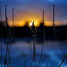 Winter's Last Light by Melissa Drummond