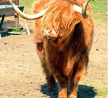 Heilan Coo II by Tom Gomez