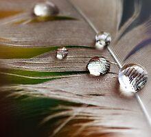 Plumage by Samantha  Nicol