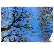 Farnley Trees Poster