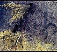 colorful crab holes by Sameer R.K.