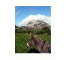 Donkey at Mt Errigal Art Print