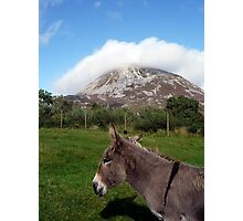 Donkey at Mt Errigal Photographic Print