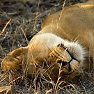 Kruger National Park, South Africa. 2009 VI by Damienne Bingham