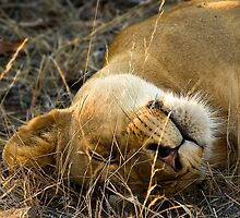 Kruger National Park, South Africa. 2009 VI by Damienne Bingham